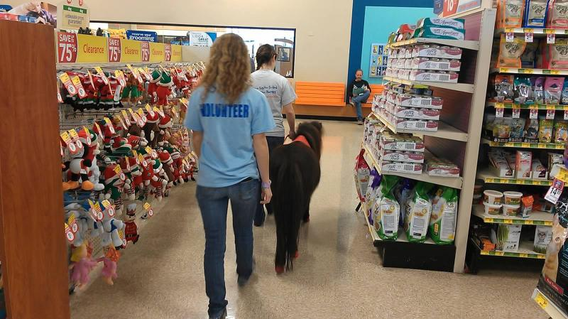 SeanMonet leading the way in PetSmart (floor training)