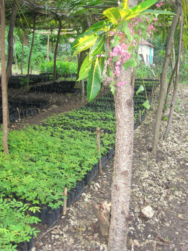 Tree Nursery- community led reforestation