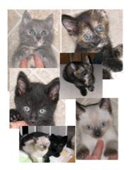 Kittens killed for FIV MYTHinformation