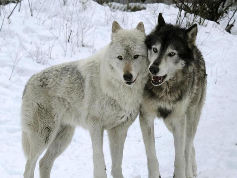 Jesse & Shiloh love snow days!