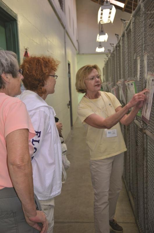 Our volunteer visitor assistants escort potential adopters through the dog kennels and help answer their questions.