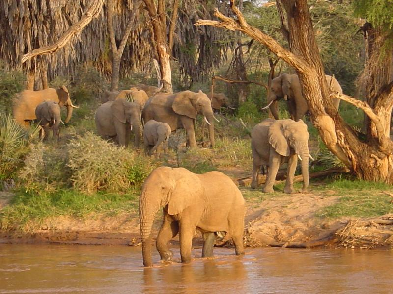 Elephants are one of the species that WCN works to protect.