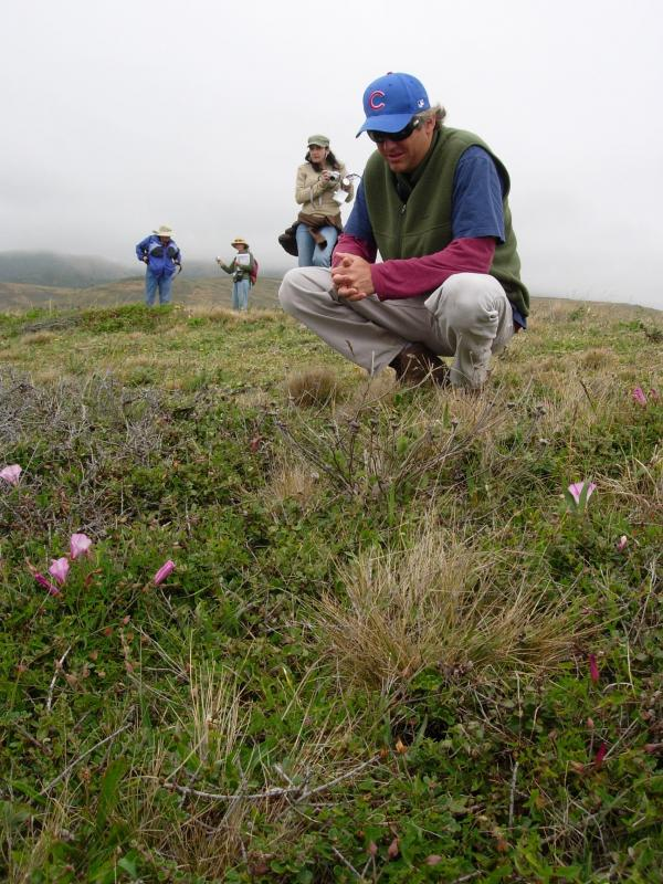 Kevin Merk finds rare Calystegia at a CNPS professional training workshop.