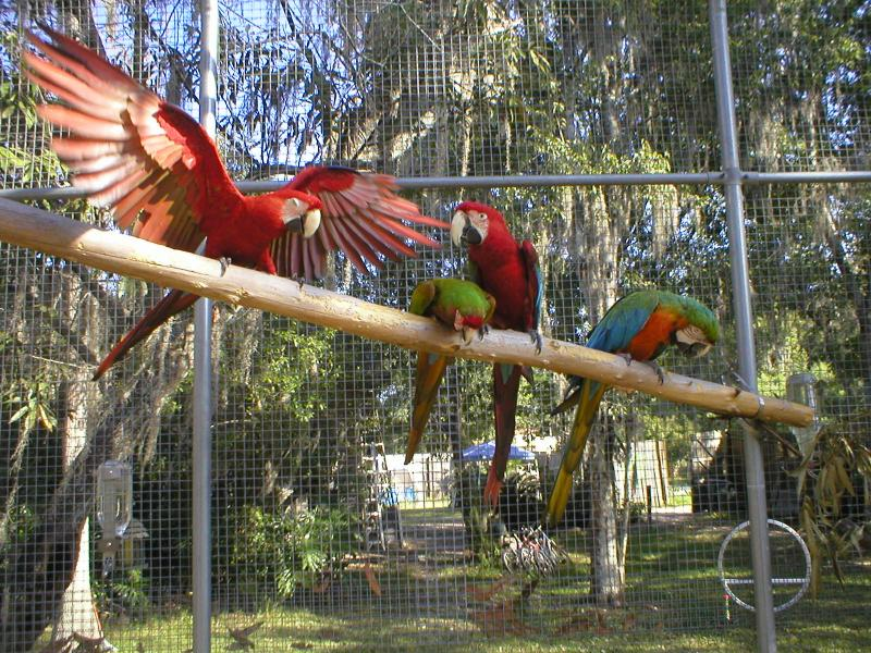 Macaw Heaven at FEBS