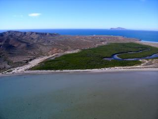 Mangroves in Magdalena Bay