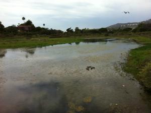 Discovery Field Trip to Malibu Lagoon