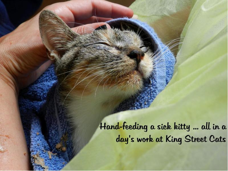 We have amazing volunteers who give our cats the TLC they need to thrive!