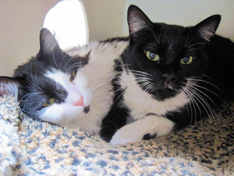 Beautiful many-toed sisters, Polly Ann & Molly Ann