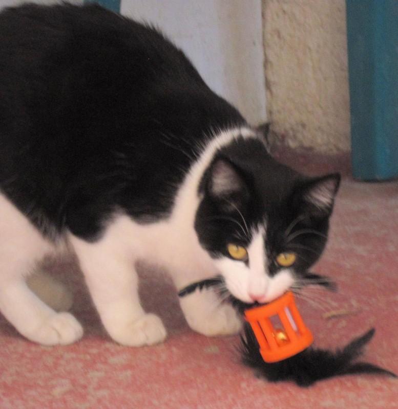 Moo- FeLV+ kitty