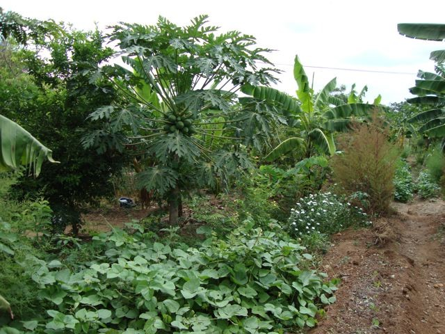 Musoma Permaculture Garden