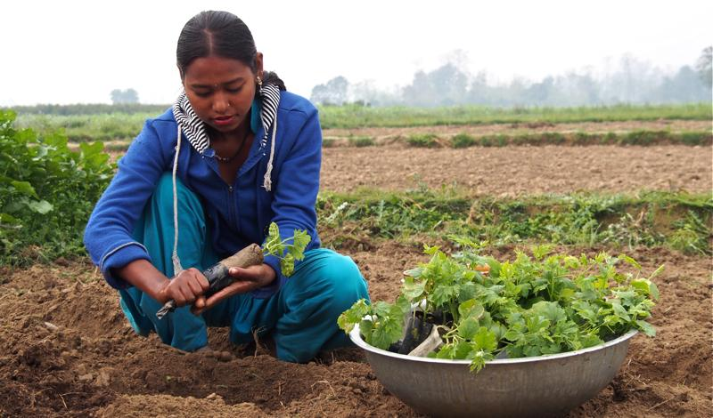 Asmita learned vegetable farming through NYF's Vocational Education and Career Counseling Program and now operates a successful family farm