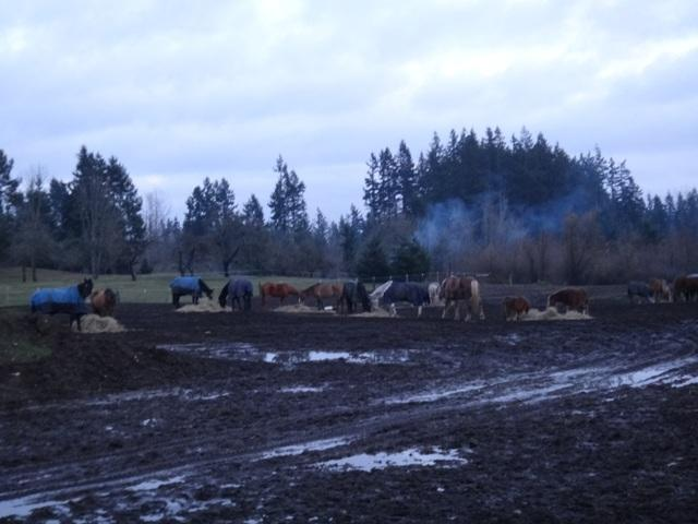 Winter feeding is very challenging when the pasture turns to mud