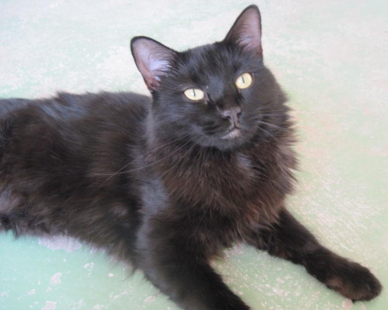 Noelle- abused as a kitten, she lost her tail and the ability to control ehr bowels/bladder