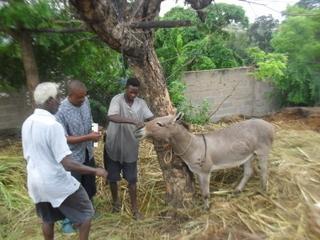 AKI supports Tanzania Animal Welfare Society's donkey welfare program