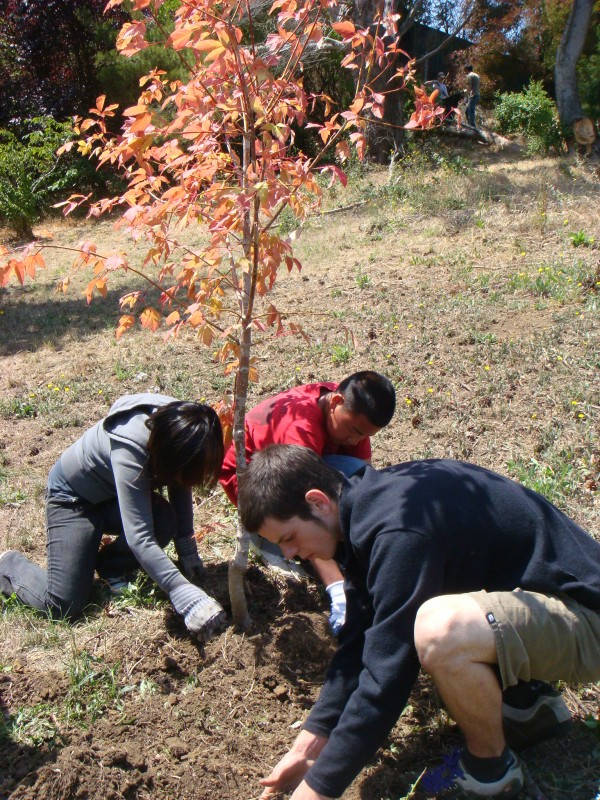 McLaren Park Tree Planting