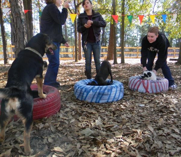 Training dogs to become more suitable pets and increase adoption potential!