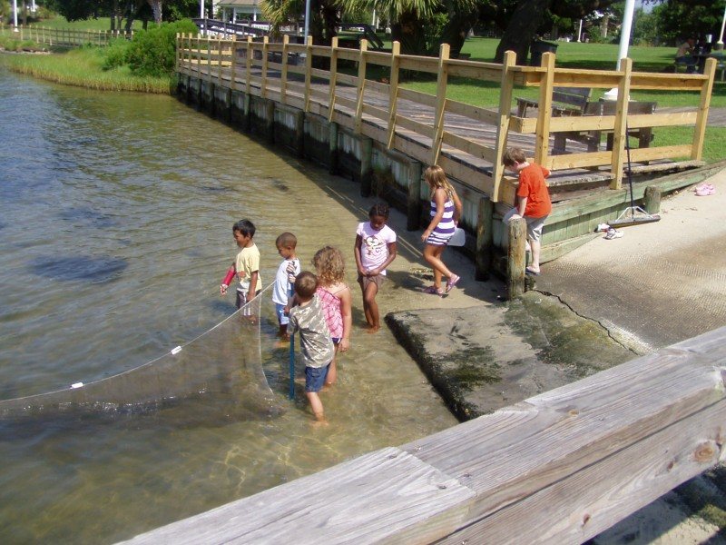 Seining in the Santa Rosa Sound during Sea Science Adventure camp!