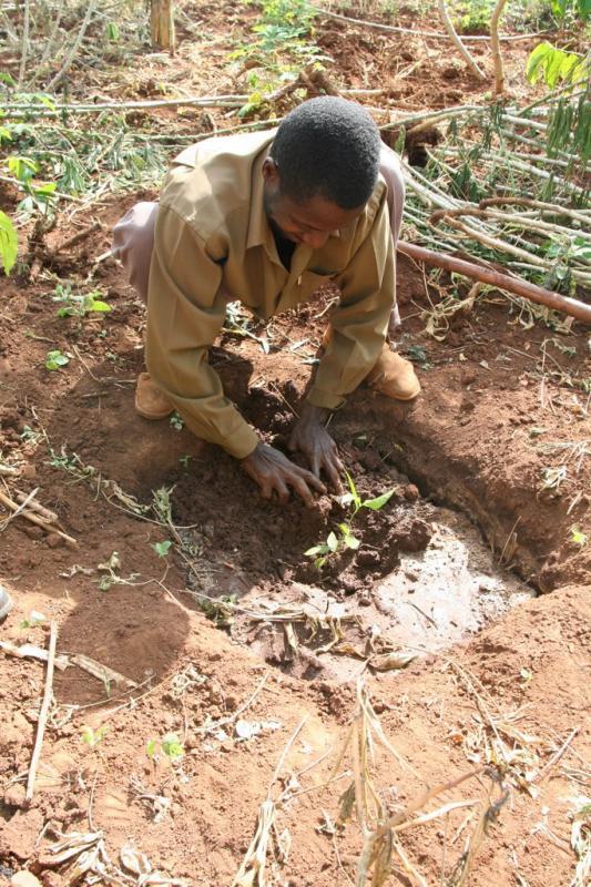 Planting a Mvule Tree