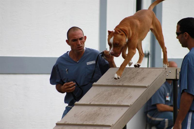 Prison, Pups, N Pals