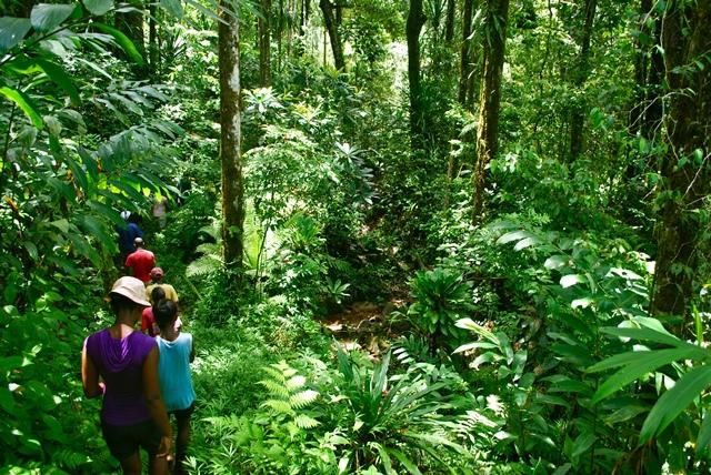 Rainforest bordering our communities