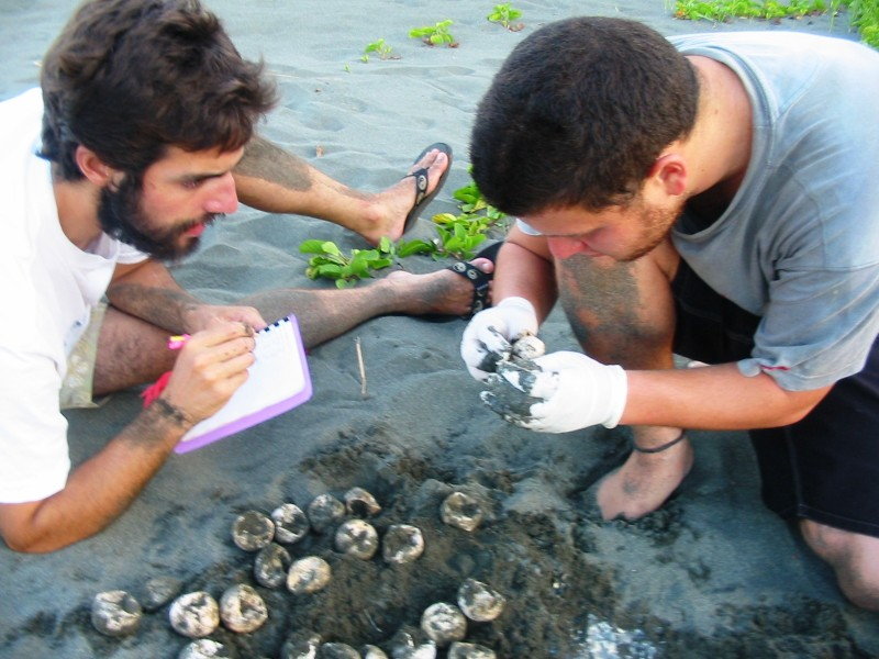 Collecting data on turtle eggs in Costa Rica
