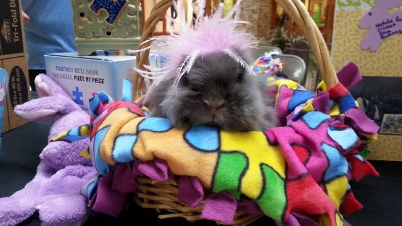 This is Sara, a registered/certified therapy rabbit with Bunnies in Baskets (Therapy Rabbits) at an event for children with autism. One of F5RS's many programs.
