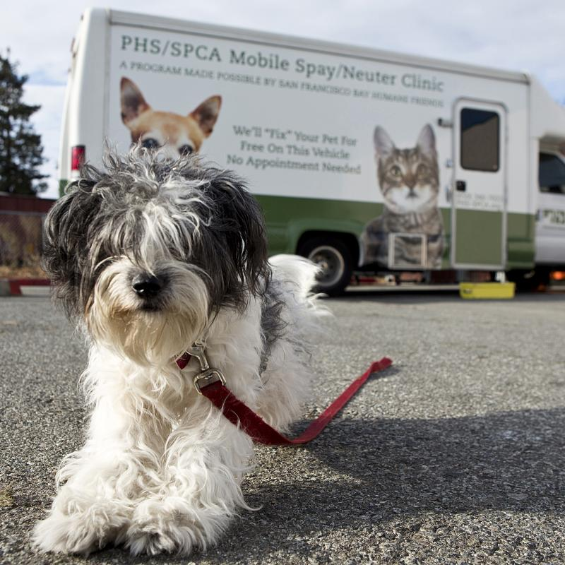 Trained staff in our donor-supported clinic perform spay/neuter surgeries on every animal adopted from PHS/SPCA, and provide low-cost surgeries for members of the public and their animals.  We also have a free mobile clinic that travels the Peninsula.