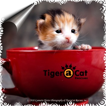 TigeraCat Logo button w/Sally Ann