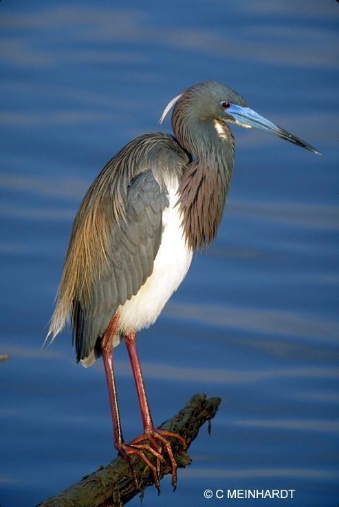 Excellent Birding Site