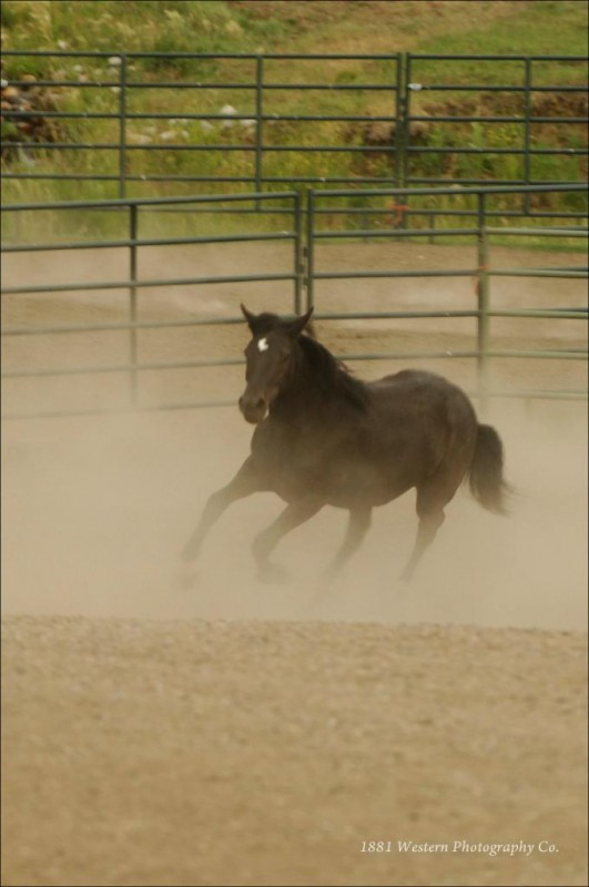 Running Tara