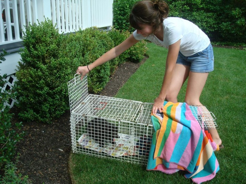Taylor releasing feral cat after spay/neutering