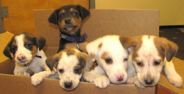 Finding homes for litters and litters of puppies!