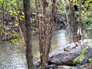 North Fork Peachtree Creek