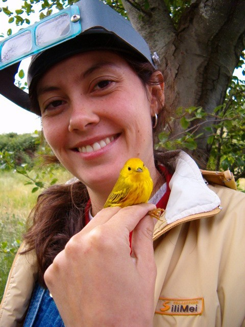 KBO bird banding  intern from Colombia treats onlookers with a close-up view of a Yellow Warbler.