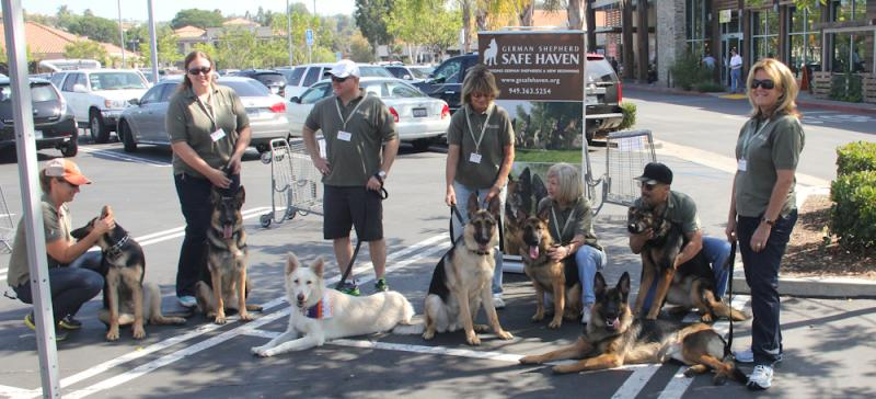 Our Dogs and Volunteers