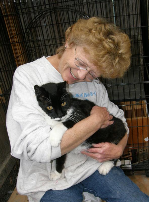 Volunteer Extraordinaire Kacey socializing Senior FIV+ cat