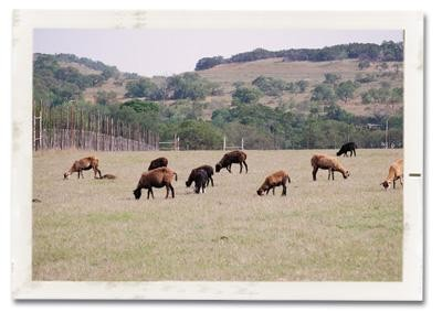 One of WRR's grazing pastures
