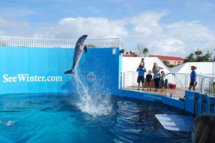 Nicholas, Our Only Male Dolphin, Was Found on Christmas Eve 2002.