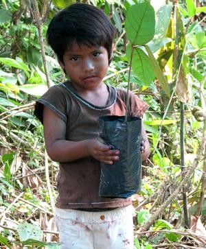 A child planting a tree as part of our agroforestry work in Madre de Dios, Peru.