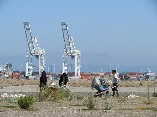 Restoring habitat for endangered California Least Terns at the old Alameda naval base / Photo by Ric