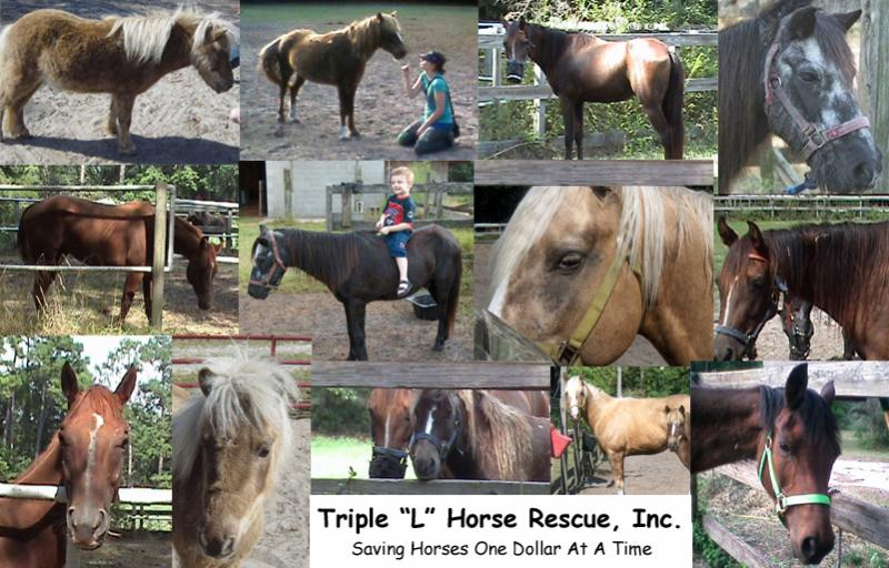 Some of the horses that TLHR has saved.