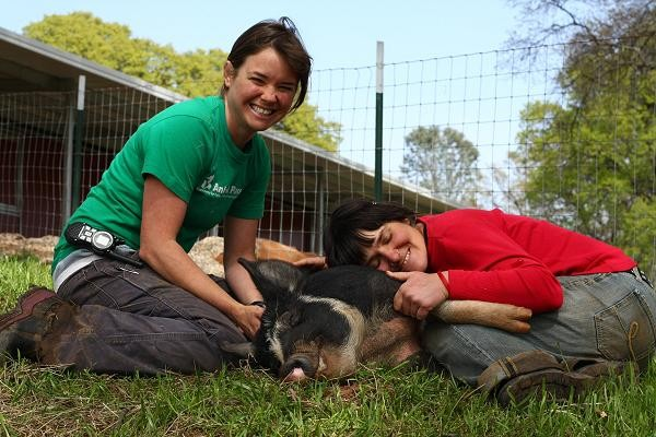 Caregivers snuggle with rescued pig Sally
