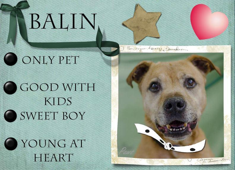 Balin is a 12 year old man, who still has a lot of puppy in him.  He would love to spend his remaining years in a home of his own.