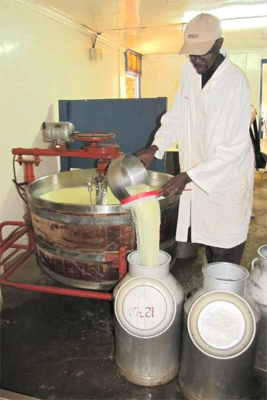 Making cheese at Baraka Farm