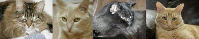 4 Beautiful FIV+ cats: Princess, James