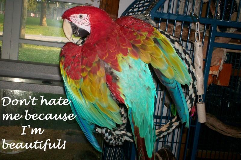 Jackson the macaw