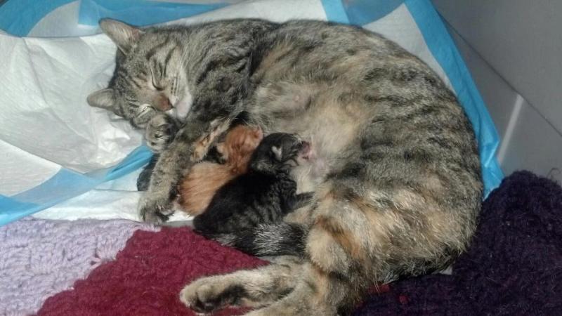 Momma & Kittens