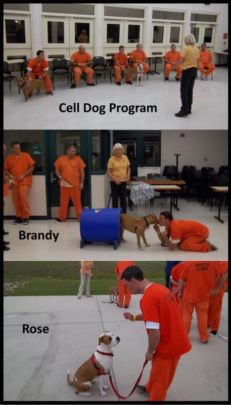 This cooperative program with Charlotte County SO provides socialization for canines with certain temperament problems. The training course strives to teach a sense of responsibility to the inmate and the assurance of a new permanent home for the dog.