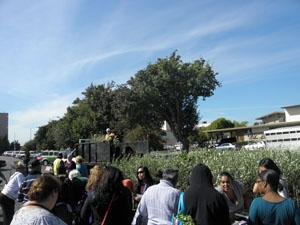 City of Richmond staff help with olive tree giveaway