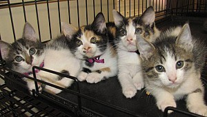 Finding homes for litters and litters of kittens!